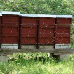 Bienenstand in der Fränkischen Toskana